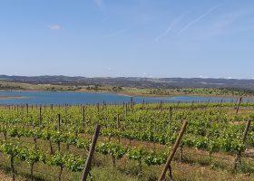 Esporao vines