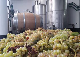 Alentejo Wine Tours